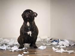 老闆上班帶狗 她崩潰揭辦公實況:不能接受想離職