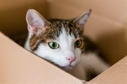 玻璃窗反射貓待紙箱內 見實體喵星人秒隱形7萬人看呆