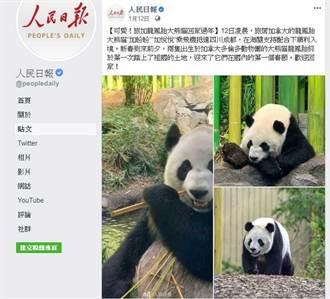 斷糧危機!加拿大熊貓快沒竹子了 園方:讓牠們回有食物的地方