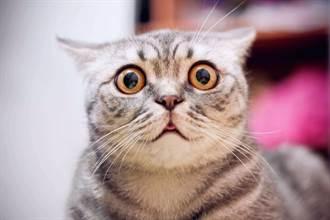 嬌貴貓皇被熱氣「煞到」暴衝進屋 笑翻220萬人