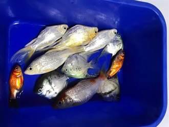 整缸魚遭客人倒半罐浴廁劑慘死 老闆怒咒:祝你全家下地獄