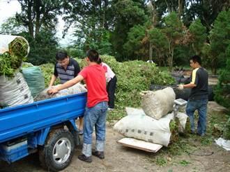 南投設4處收購小花蔓澤蘭 每公斤最高7元