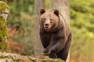 騎機車路過被3「巨熊」飛撲 郵差開心下車陪玩