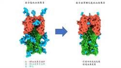 防止冬季新冠+流感同時夾攻 中研院研發A流感廣效疫苗 以1打多