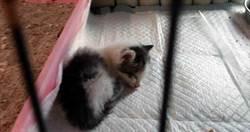 認養30貓狗「27隻蒸發」 台東男涉虐殺毛孩 審理期間離奇自撞亡
