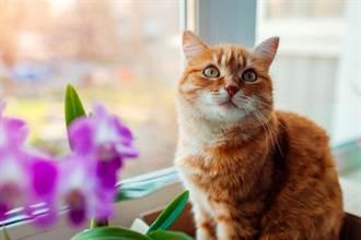 紙箱貓處在「有跟沒有之間」網一看笑翻:薛丁格的貓?