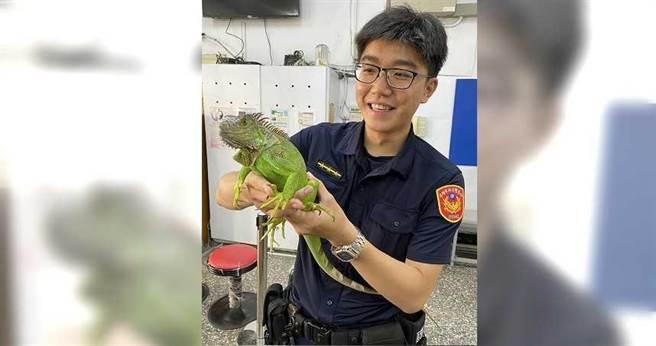警方將逛大街的綠蜥蜴帶回派出所先行照料。(圖/警方提供)