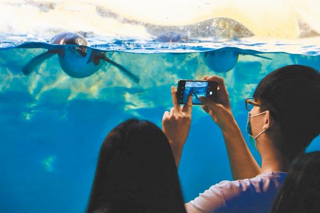 屏東海生館暑假「夜宿」無成長,不過館方看好進入企鵝繁殖季後的發展。(謝佳潾攝)