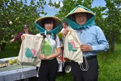 文旦產季到麻豆農會行銷 預約採果還送時尚包包