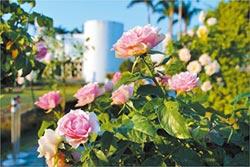 臺北祕密花園 700種玫瑰耍浪漫