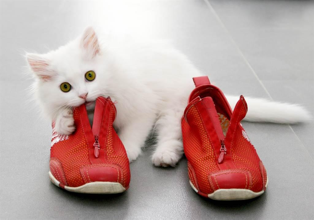 家中每天出現神秘陌生鞋 女看監視器驚見愛貓怪癖(示意圖/達志影像)