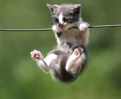 浪貓單手驚險垂掛半空中 撕心呼救聲讓人心碎