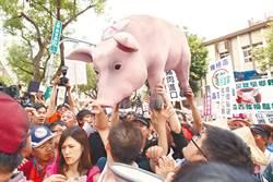 就等美方招手 美媒:蔡英文將開放美豬美牛換自貿協定