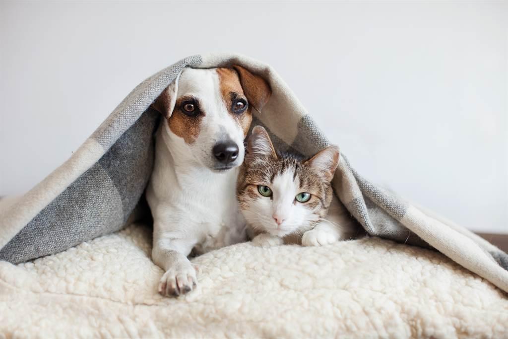 狗狗領養回家竟貓魂上身 冰箱上冒巨大身影主人笑翻(示意圖/達志影像)