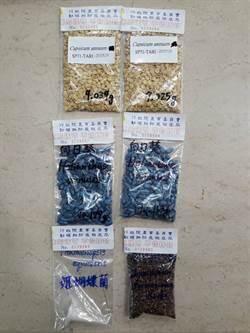 台灣種子的番椒、向日葵、姬蝴蝶蘭及台灣藜10月首度登太空