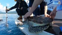 動物走私破案 99隻海龜重回家園