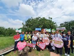 麻豆文旦上市6柚農攜手獻愛做公益