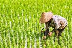 台灣為何沒有糧食危機?內行曝驚人真相