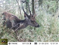 野生動物監測新紀元 中大型哺乳動物全臺監測網成形