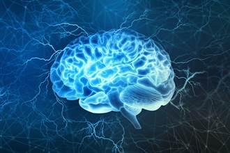 為何大腦總受「感情」支配