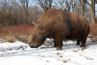 西伯利亞發現1.4萬年前「小狗」 胃中殘骸竟是犀牛