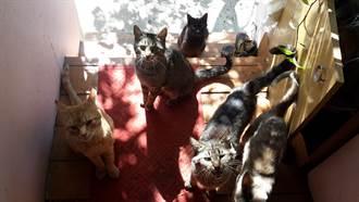 一開門5「貓型鯉魚」狂撲來 網羨:這什麼天堂