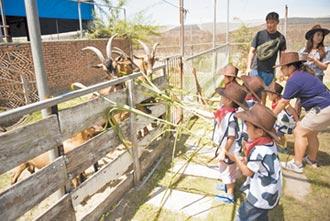 餵牧草掃羊便 食農教育超夯