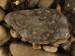 童釣魚撿到「化石」開心帶回家 隔天警急找上門:太危險
