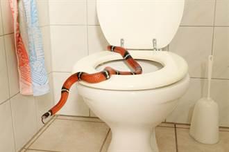 馬桶又竄出蛇!18歲少年命根子被咬一口血濺廁所