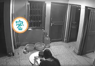 居家監視器疑拍到動物靈體 網驚:白色的超明顯