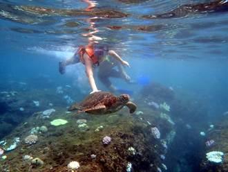 國小生浮潛觸摸海龜沒事?未滿12歲免罰僅告誡
