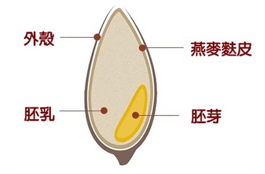 燕麥麩皮指的是燕麥最外層的一層麩皮,富含膳食纖維。(圖片來源:吳孟瑤製圖)
