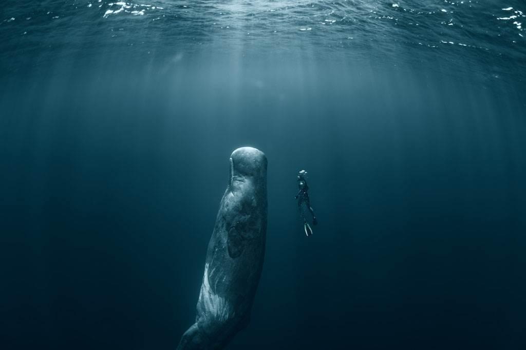 抹香鯨「組團站著睡」激似海洋版巨石陣(示意圖/達志影像)