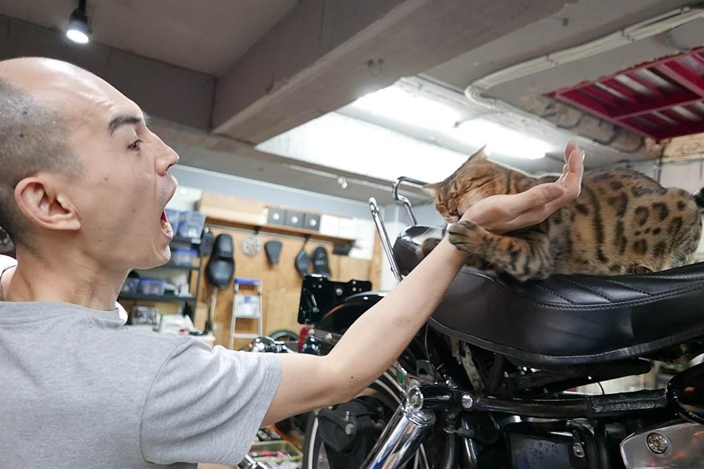 小周同時也是貓奴,店貓就是這隻《莎夏》,所有客人都認識他,也不在乎《莎夏》會在他們的車上蹭來蹭去。而小周也覺得養哈雷跟養貓一樣,看到貓玩具、罐罐就會一直想買給貓主子用,所以他才會對想入手哈雷的車主,提出想玩哈雷要多準備錢的建議。