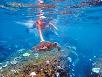 兒童浮潛摸海龜 網友PO照開轟