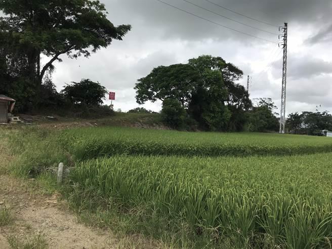 不分蓝绿议员20日都质疑绿线捷运G12、G13、G13a车站周边土地开发计画,有无公益性及必要性,担忧绿油油的农地消逝。(蔡依珍摄)