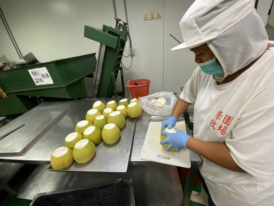 加工廠進行文旦加工處理。(台南市農業局提供/劉秀芬台南傳真)