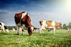 母牛難產7小時生下「4眼雙頭牛寶寶」 村民:很難養活
