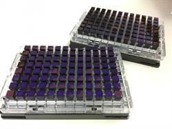 種鴨蛋殼顏色輔助 大幅提升育種效率