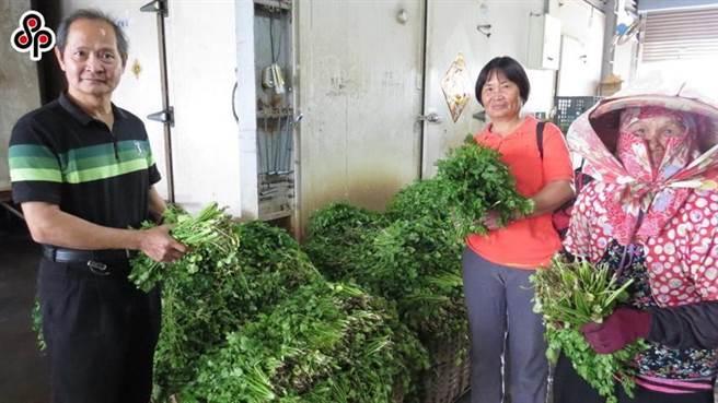 農民展示香菜的情況。(圖/本報系資料照)
