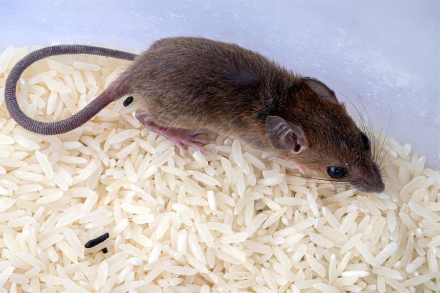 長輩圖「老鼠吃米」勸努力  她曝神邏輯:可躺著吃出去幹嘛 - 生活