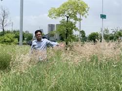 市議員批單元五重畫區雜草叢生 建設局:重劃會允諾一週內進場除草