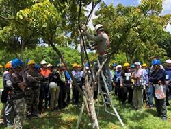 落實專業修剪 工務局開辦樹木健檢研習班
