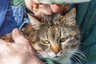 84歲爺爺跌倒無助躺浴室16時 貓主子聽懂「叮鈴暗號」救他一命