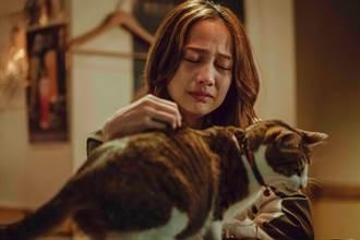 簡嫚書《黑喵》家庭破裂 接受心理治療「哭到不能自己」