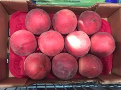 好市多買水蜜桃一夜爛4顆 網:少了一步