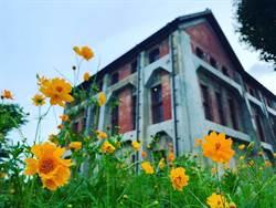 水道博物館數公頃波斯菊盛開 賞花打卡正是時候