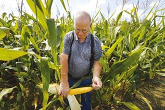 疫情令美国农民破产