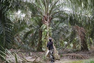 棕櫚油是天賜之禮?
