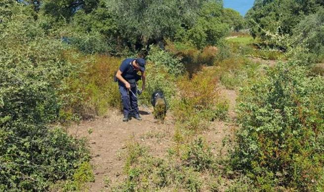 當地警方派出警犬搜救。
